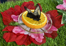 Schmetterling auf mandartne Stockfotos