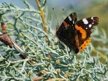 Schmetterling auf Niederlassung stockbilder