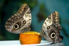 Schmetterling auf Orange stockfotografie