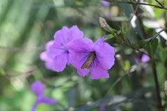 Schmetterling auf purpurroter Blume Lizenzfreie Stockbilder