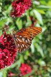 Schmetterling auf roter Blume Lizenzfreie Stockfotos