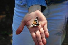 Schmetterling beflügelt mit farbigen Punkten auf der Palme Lizenzfreie Stockfotos