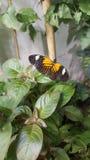 Schmetterling beschmutzt die schöne Natur Stockfotografie