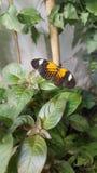 Schmetterling beschmutzt die schöne Natur Stockbild