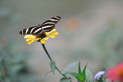 Schmetterling bokeh Lizenzfreies Stockfoto