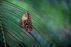 Schmetterling bokeh Lizenzfreie Stockfotografie