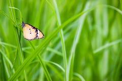 Schmetterling brackground Lizenzfreies Stockfoto