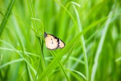 Schmetterling brackground Lizenzfreies Stockbild