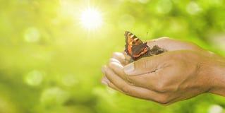 Schmetterling in den Händen stockbild