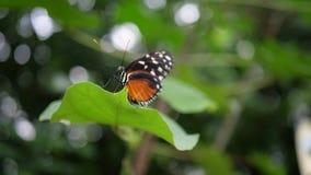 Schmetterling, der auf Anlage mit grünem Hintergrund sitzt Stockfotos