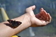 Schmetterling, der auf Arm auf Naturhintergrund sitzt Lizenzfreies Stockbild