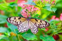 Schmetterling, der auf Blume sitzt Stockbilder