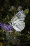 Schmetterling, der auf einer blauen Blume stillsteht Stockfotos