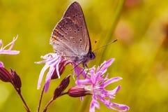 Schmetterling, der auf einer Blume sitzt Stockfoto
