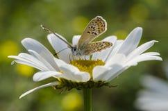Schmetterling, der auf einer Blume sitzt stockbild