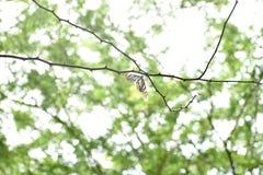 Schmetterling, der auf einer Niederlassung sitzt lizenzfreies stockfoto