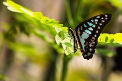 Schmetterling, der auf einigen Blättern sitzt lizenzfreies stockbild