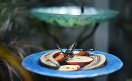 Schmetterling, der auf Früchten sitzt Stockbild