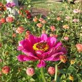 Schmetterling in der Blume lizenzfreie stockbilder