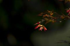 Schmetterling, der die Blume jagt Lizenzfreies Stockbild