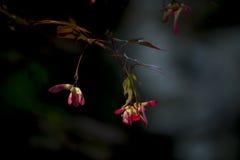 Schmetterling, der die Blume jagt Stockfotos