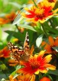 Schmetterling, der in einen Blumengarten einzieht Lizenzfreie Stockfotografie