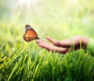 Schmetterling in der Hand auf Gras Lizenzfreies Stockfoto