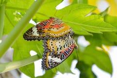 Schmetterling, der im Garten verbindet Lizenzfreies Stockbild