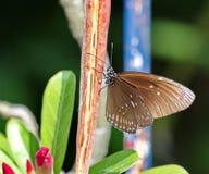 Schmetterling, der im Sonnenschein sich wärmt Stockfoto