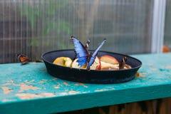 Schmetterling, der Lebensmittel im botanischen Garten isst Stockbild