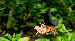 Schmetterling in der Natur lizenzfreie stockfotos