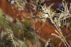 Schmetterling in der Sonne Lizenzfreie Stockfotografie