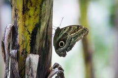 Schmetterling in der Verkleidung stockfoto