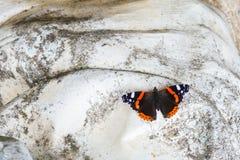Schmetterling des roten Admirals auf weißem Stein Stockfotos