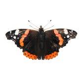 Schmetterling des roten Admirals lokalisiert auf Weiß Lizenzfreies Stockfoto