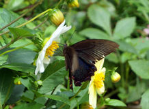 Schmetterling in Dujiang-Verdammung sicuan Chengdu Lizenzfreies Stockfoto