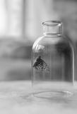 Schmetterling in einer Flasche Lizenzfreies Stockfoto