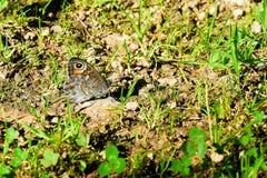 Schmetterling erhitzt oben vor Start lizenzfreie stockfotografie