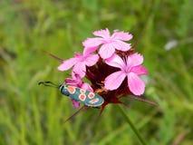 Schmetterling fiower Stockbild