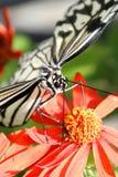 Schmetterling in Florida Lizenzfreies Stockfoto