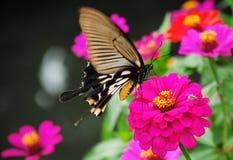 Schmetterling gegen Spinne lizenzfreie stockfotografie