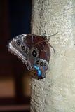 Schmetterling gehockt auf Baum-Stamm Lizenzfreie Stockfotografie