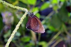 Schmetterling gehockt auf grüner Rebe Lizenzfreie Stockbilder