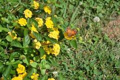 Schmetterling gelandet auf einer Ringelblume Lizenzfreie Stockbilder