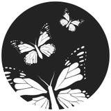 Schmetterling, grafische Art, Hand gezeichnet, Schwarzweiss-Vektorillustration lizenzfreie stockfotos