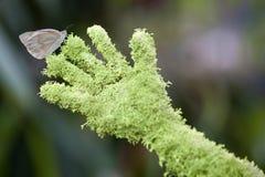 Schmetterling an Hand stockfoto