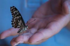 Schmetterling an Hand Stockbild