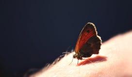 Schmetterling an Hand Stockbilder