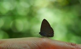 Schmetterling an Hand Stockfotografie
