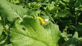 Schmetterling herein archiviert für Sie stockfotos